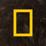 national geographic facebook instant articles