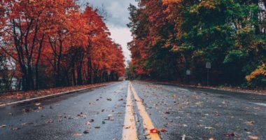 Fall Road With Colorful Leaves